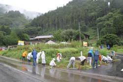 雨の中、草取りをする学生たち